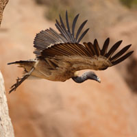 Implementation of National Vulture Conservation Project